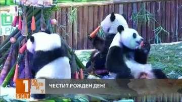 Панди тризнаци отпразнува рождения си ден