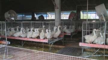 Птицевъди излизат на протест пред Агенцията за безопасност на храните