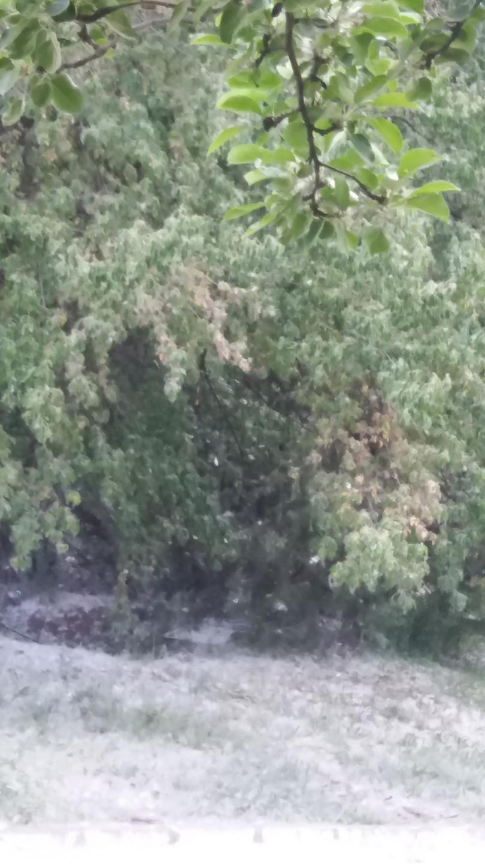 снимка 1 Виелица от пух в софийския квартал Дианабад