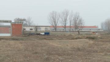 Всички патици от фермата край Раковски вече са унищожени