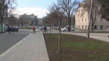 Хората в Разград си искат дърветата