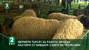 Фермери търсят да наемат на работа  хиляда пастири от бившите съветски републики