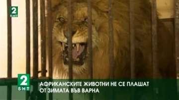 Африканските животни не се плашат от зимата във Варна