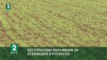 Без сериозни поражения върху есенниците в русенско