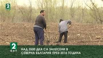 Над 3500 дка са залесени в Северна България през 2016 година
