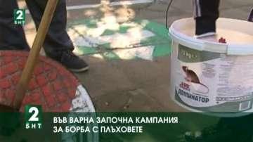 Във Варна започна кампания за борба с плъховете