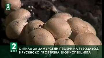 Сигнал за замърсени пещери на гъбозавод в Русенско проверява екоинспекцията
