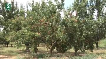 Агрономи  изготвят план за растителна защита в съответствие с климата