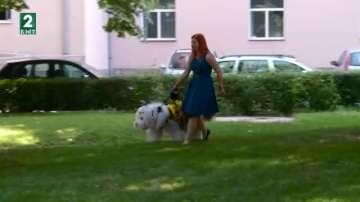 Бобтейлът Мон влиза в час в Пловдив