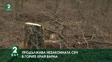 Продължава незаконната сеч в горите край Варна