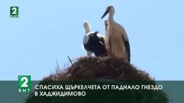 Спасиха щъркелчета от паднало гнездо в Хаджидимово