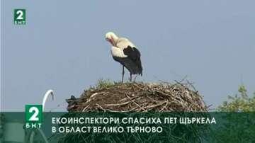 Екоинспектори спасиха пет щъркела в област Велико Търново