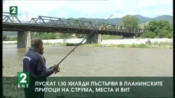Пускат 130 хиляди пъстърви в планинските притоци на реките Струма, Места и Вит