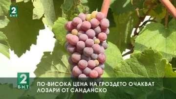 По-висока цена за гроздето очакват лозари от Санданско