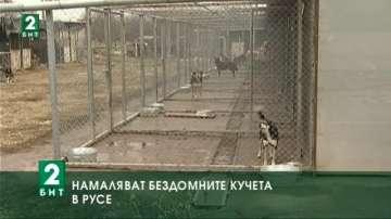 Намаляват бездомните кучета в Русе
