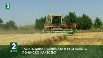 Тази година пшеницата в Русенско е с по-ниско качество
