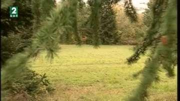 Горското стопанство Варна възобновява 200 декара гори