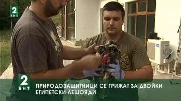 Природозащитници се грижат за двойки египетски лешояди  и за щъркели