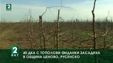 40 дка с тополови фиданки засадиха в община Ценово, Русенско