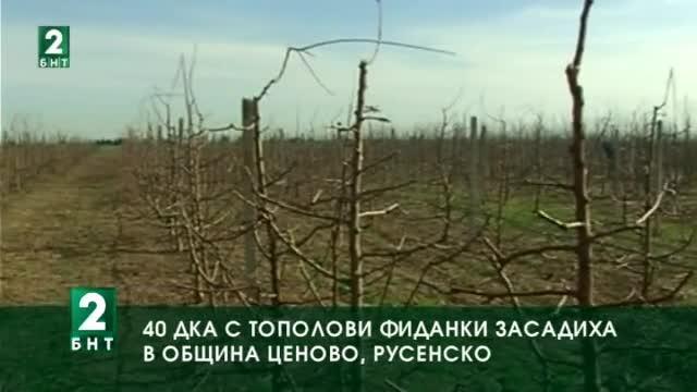 С 40 дка се увеличиха горските масиви в община Ценово,