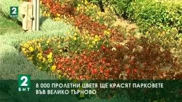 8000 пролетни цветя ще красят парковете във Велико Търново