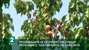 Производители в Русенско не могат да пласират продукцията си от кайсии