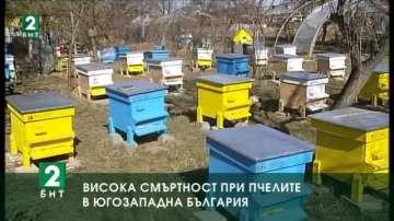 Висока смъртност при пчелите в Югозападна България
