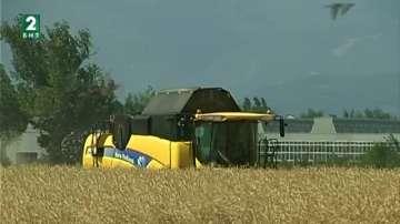 Зърнопроизводители се притесняват за реколтата