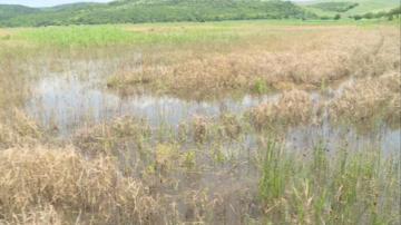 5 хил. декера наводнени земеделски земи в района на село Караманово
