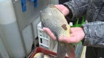 Засилени проверки на риба в търговската мрежа преди Никулден