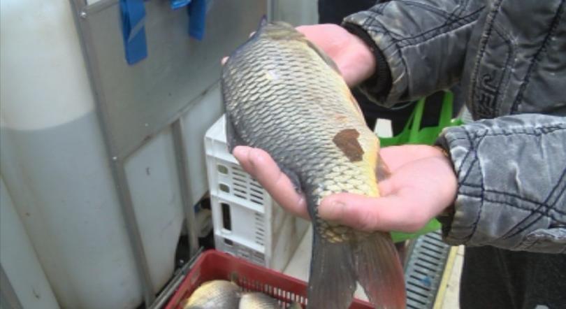 Как да приготвим традиционен рибен курбан?