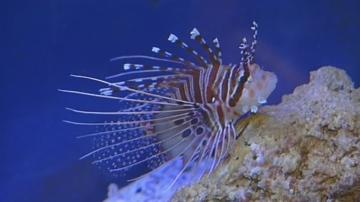 Най-отровните риби в света са показани в Пловдив