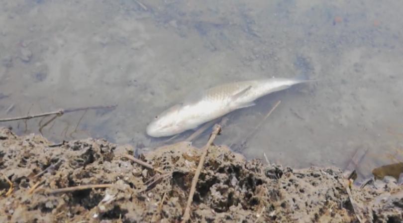 Няма опасност за питейната вода на Пловдив след замърсяването на