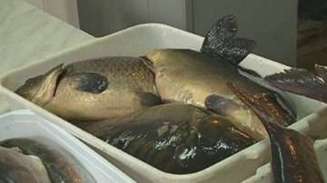 Засилени проверки на Агенцията по храните в магазините за риба преди Никулден