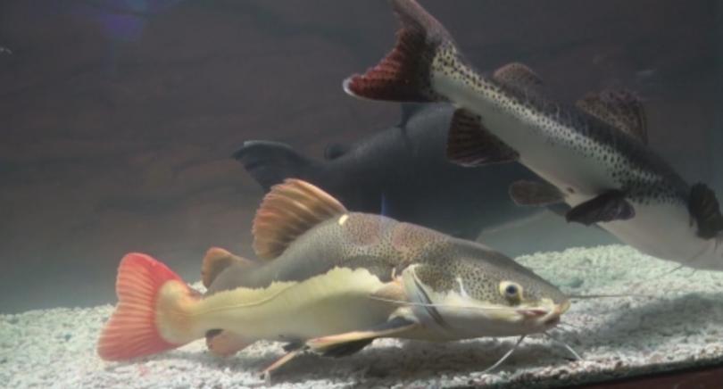 Снимка: Изложба на екзотични риби в Бургас
