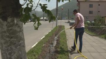 В село Черниче засадиха 130 фиданки от Дървото на Юда