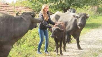 25-годишна рокерка от Велико Търново сама отглежда стадо биволи