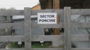 Около 400 са огнищата на африканска чума по свинете в Румъния