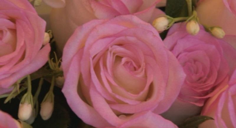 снимка 1 Закон ще гарантира качеството на българското розово масло