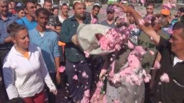Протест срещу ниската изкупна цена на розовия цвят