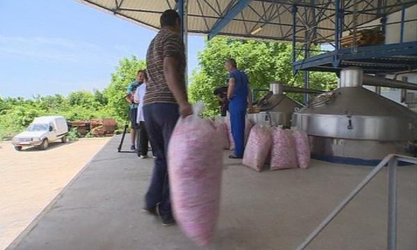 изплатиха близо млн схемата minimis розопроизводителите