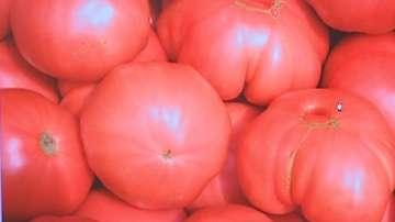 Розовият домат от Куртово Конаре кандидатства за защита в Европейския съюз