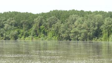 Нивото на река Дунав при Видин премина 750 см.