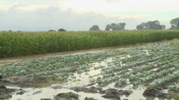Наводнени са хиляди декари земеделска земя в община Садово