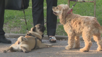 Ще има ли ефект от по-високите глоби за стопаните на кучета?