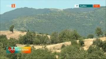 Откриха около 200 дка канабисови насаждения в Петричко