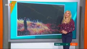 АРТ посоки с Галя Крайчовска: Филмовите премиери на седмицата