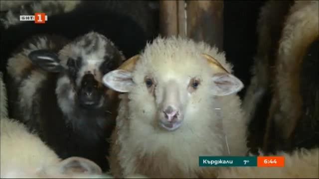 Снимка: Преди Великден и Гергьовден: Засилени проверки по магазините за агнешко месо