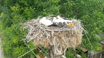 Авариен екип на Електроразпределение Север спаси паднало от гнездо щъркелче
