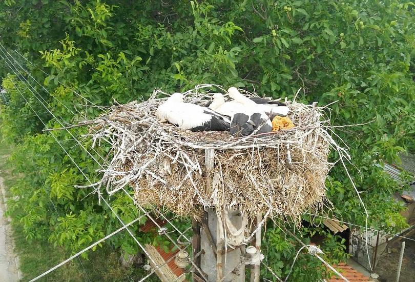 Екипи на Електроразпределение Север спасиха паднало от гнездото щъркелче в